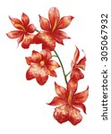 Watercolor Tropical Red Orchid...