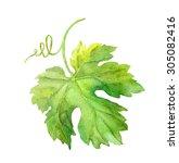Grape Leaf Of Vine With Swirl....