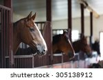 Stock photo head of horse looking over the stable doors on the background of other horses 305138912