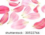 petals of a lily   Shutterstock . vector #30522766