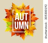 autumn typographic. fall leaf.... | Shutterstock .eps vector #305300192
