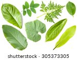 collection of pepper leaves... | Shutterstock . vector #305373305