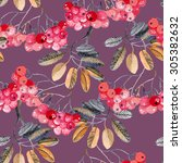watercolor rowan branches...   Shutterstock . vector #305382632