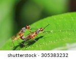 Mating Shots Of Insects....