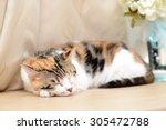 Stock photo sleepy cat 305472788