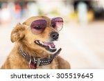 dog with sun glasses portrait... | Shutterstock . vector #305519645