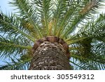 palm tree trunk and leaves. | Shutterstock . vector #305549312