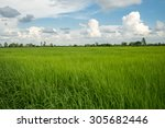green rice field with blue sky. | Shutterstock . vector #305682446