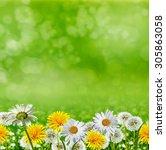 summer landscape. flowers | Shutterstock . vector #305863058