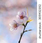 flower | Shutterstock . vector #305932352