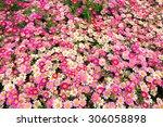 pink daisy flowers | Shutterstock . vector #306058898