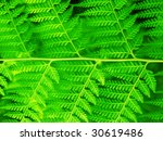 green leaves | Shutterstock . vector #30619486