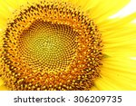 The Middle Of Sunflower
