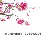 cherry blossom  sakura flowers... | Shutterstock . vector #306240305
