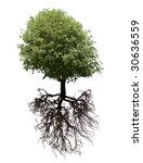 tree and its roots isolated on... | Shutterstock . vector #30636559