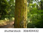 tree trunk | Shutterstock . vector #306404432
