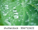 Rain Drops On Leaves Closeup