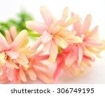 Quisqualis Indica Flower Also...
