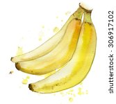 watercolor print of banana | Shutterstock . vector #306917102