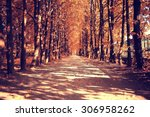 the path in the autumn forest | Shutterstock . vector #306958262