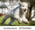 Stock photo a mixed breed dog running without leash outdoors in the nature on a sunny day 307024862