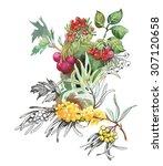 watercolor berries on white...   Shutterstock . vector #307120658
