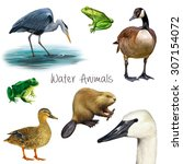 Illustration Of Water Animals ...
