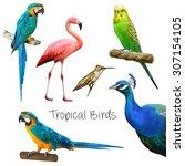 Illustration Of Tropical Birds  ...
