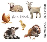 Farm Animals  Laying Calf  Goat ...