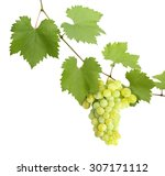 green grapevine leaves with... | Shutterstock . vector #307171112