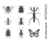 set of vector insects volume 4 | Shutterstock .eps vector #307205522