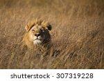 a horizontal  colour photograph ... | Shutterstock . vector #307319228