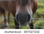 icelandic horse's nose | Shutterstock . vector #307327232
