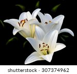 Three White Lilies On A Black...