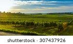 Vineyard Sunrise   Bordeaux...