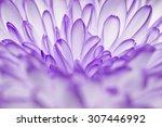 Purple Annealed Chrysanthemum...