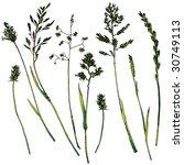 green grass | Shutterstock .eps vector #30749113