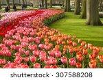 Keukenhof  The Netherlands