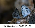 Spring Azure Butterfly On Rock.