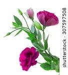 Mauve Fresh Eustoma Flowers...