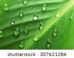 Green Leaf With Droplets ...