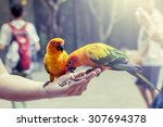 Stock photo parrot on woman hand in park in vintage color filter 307694378