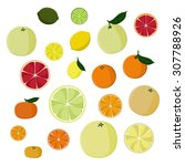 set of citrus fruits   vector... | Shutterstock .eps vector #307788926