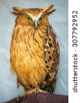 Stock photo buffy fish owl portrait close up of yellow eyes 307792952