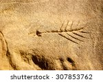 chaco culture national... | Shutterstock . vector #307853762