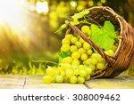 ripe grapes in wicker basket on ... | Shutterstock . vector #308009462