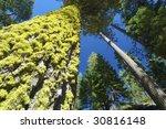 Green Lichen In Yosemite
