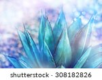 agave montana  the pointy end...   Shutterstock . vector #308182826