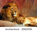 Lion And Lioness Evening Rest