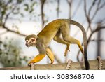 Squirrel Monkey Pictured In Th...